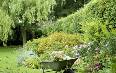 Get Year-Round Beauty With Matrix Planting in Your Garden