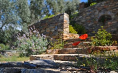 Top 10 Mistakes in Outdoor Landscaping